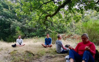 bain de forêt et sylvothérapie en brocéliande